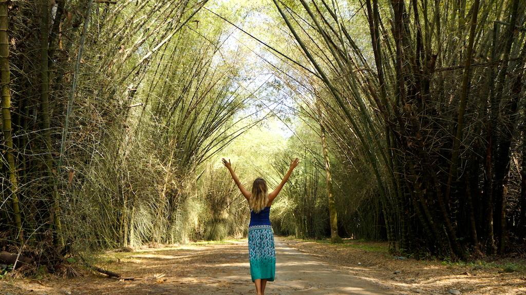 Bamboo Tunnel in the Botanical Garden Centanilla