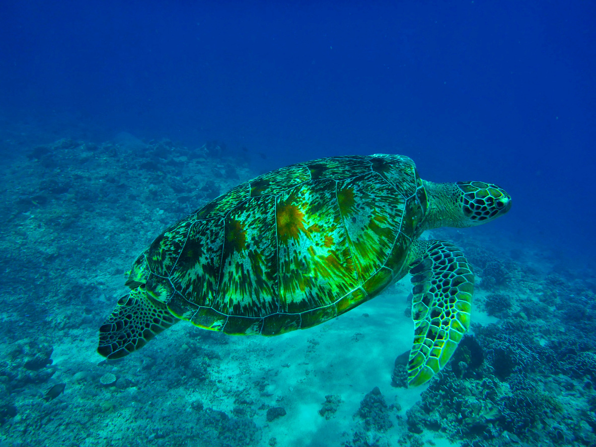Scuba Dive destination Indonesia